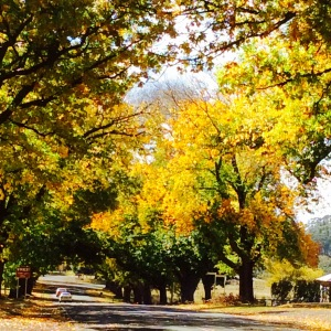 Photo Autumn trees Glenlyon Victoria