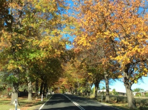 Autumn Road Tenterfield photo - used as inspriation for the two paintings.